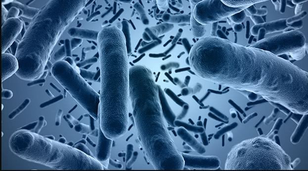Importance of Verification in Bacillus Cereus Analyzes in Foods